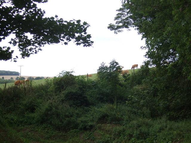 Grazing, Boynton Sheepwalk