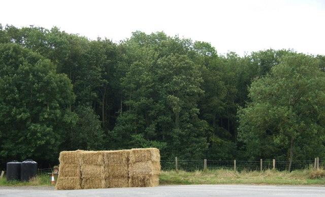 Cottage Pasture Wood