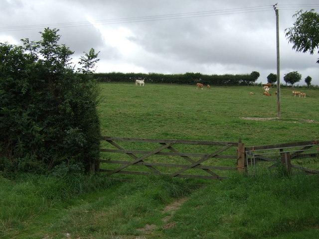 Grazing near North Wood Farm