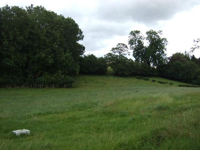 Grazing near Cottage Pasture Wood