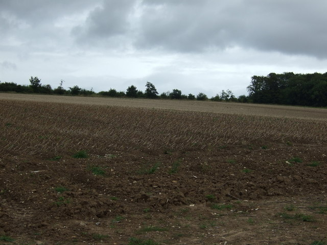 Crop field near Boynton