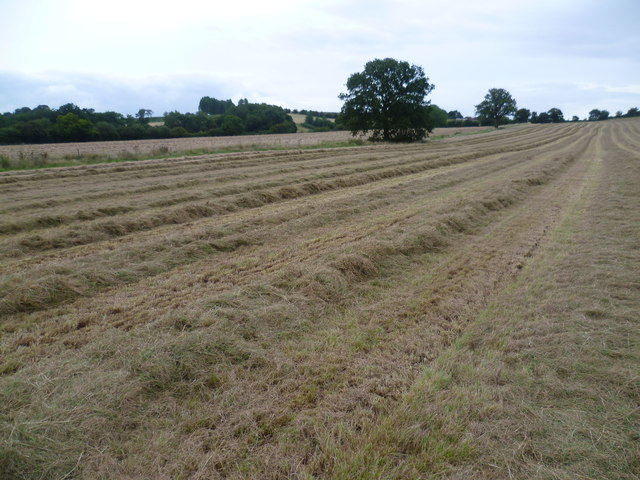 Hay ready to be baled