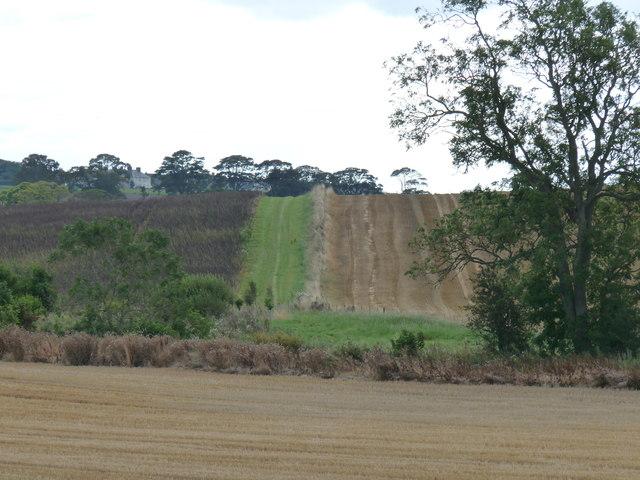 Field margins - East Blanerne