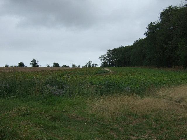 Farmland beside Cottage Pasture Wood