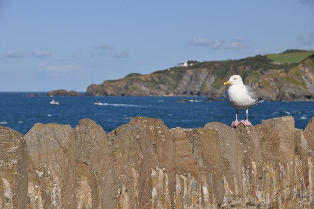 Ilfracombe : Coastal Scenery & Seagull