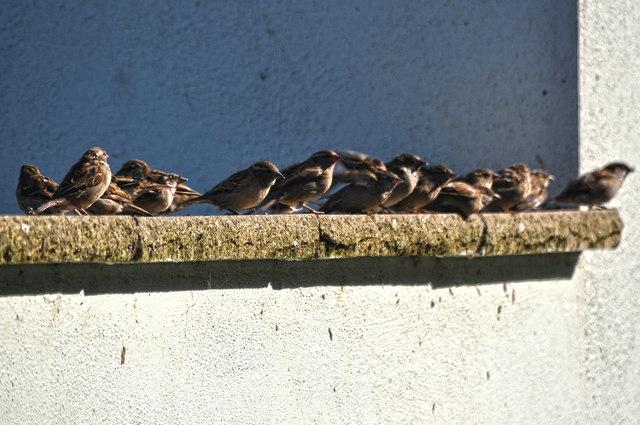 Ilfracombe : Birds on the Wall