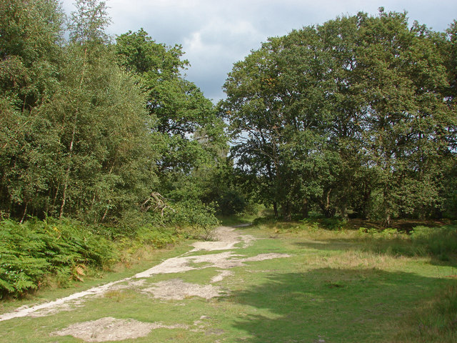 Dry heath near Aldershot