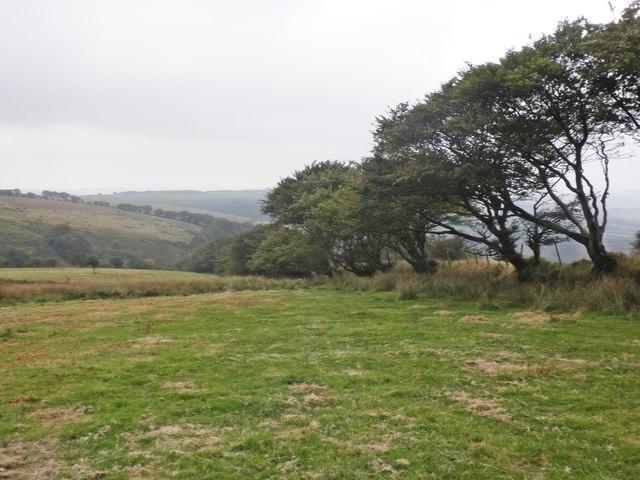 Boundary hedge on Chapman Barrows