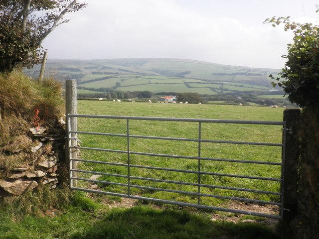 Sheep pasture above Swincombe