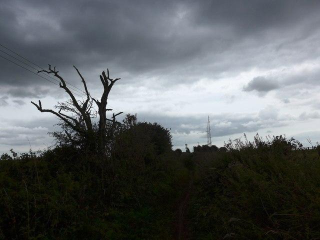 South Downs Way, Exton to Buriton (131)