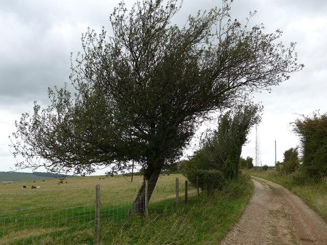 South Downs Way, Exton to Buriton (143)