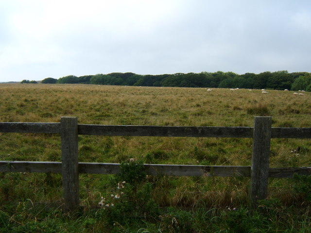 Grazing towards South Sea Plantation
