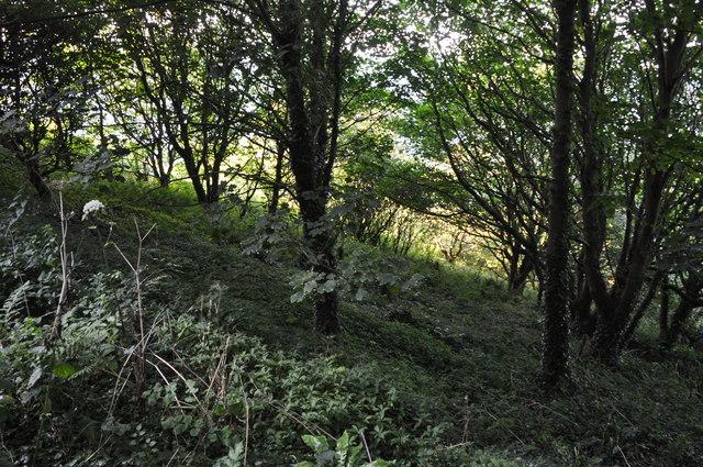 North Devon : Woodland