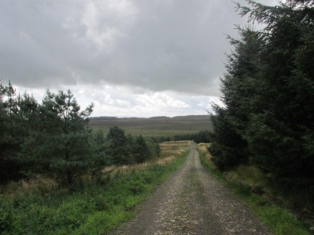 Pennine way through Wark forest.