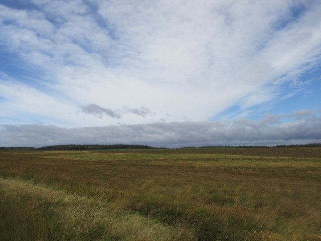 Across the moor to woodland near Coal cleugh.