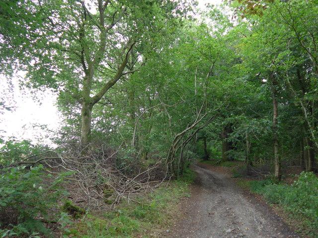South Downs Way, Exton to Buriton (172)