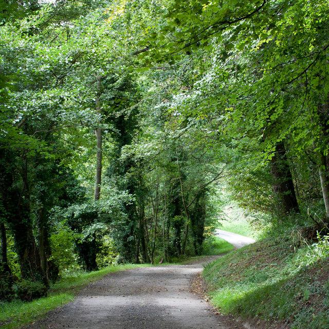 Track through Mulgrave Woods