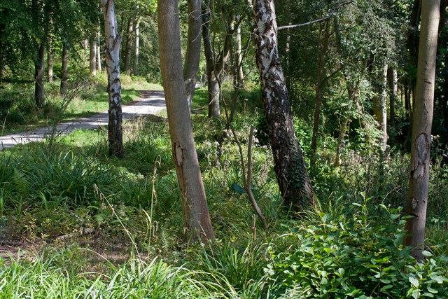 Track to Sandsend