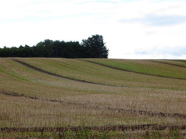 Farmland, Mains of Errol