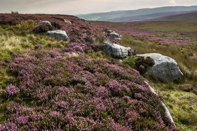 East Cat Stones Burn Moor