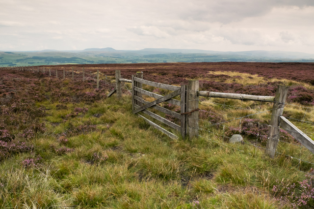 Fence and Gate Burn Moor