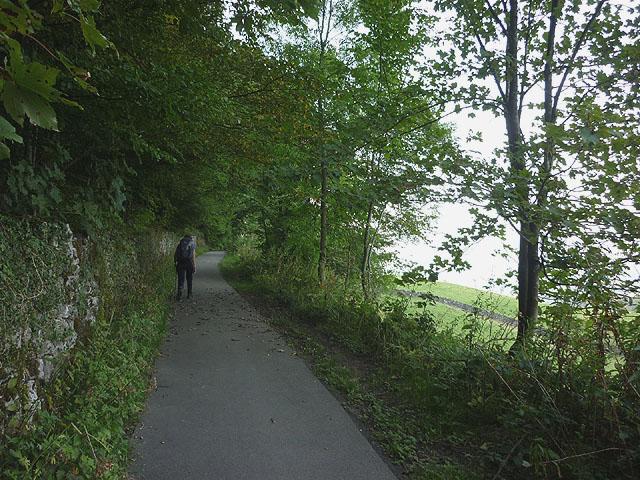 Path below Serpentine Wood