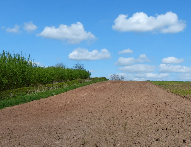 Ploughed field on the edge of Pear Tree Wood