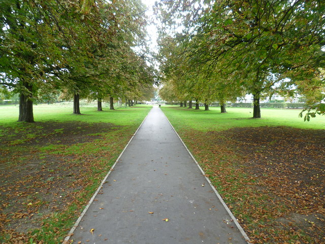 Avenue of trees on Scotch Common