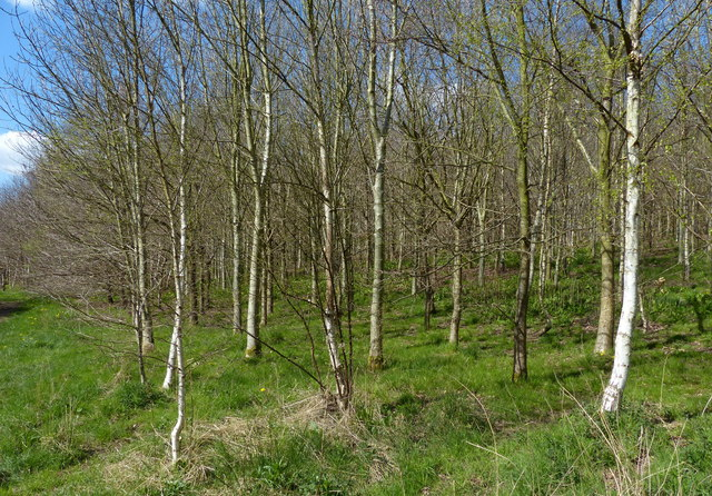 Pear Tree Wood in the Ratby Burroughs