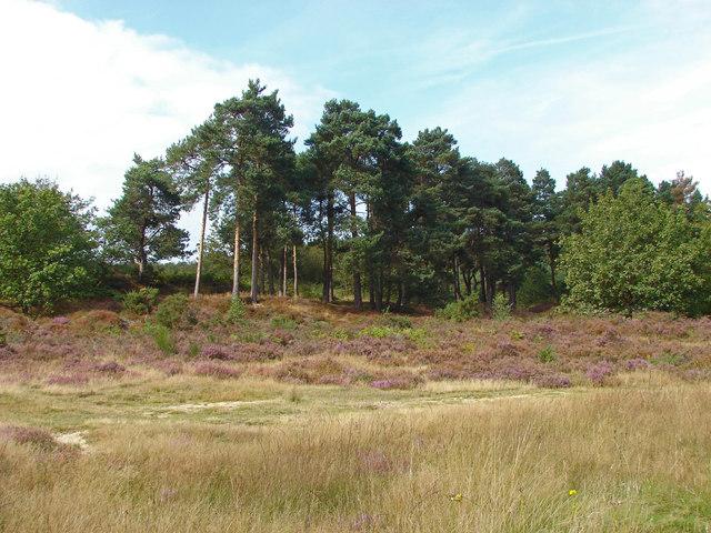 Lowland heath near Aldershot