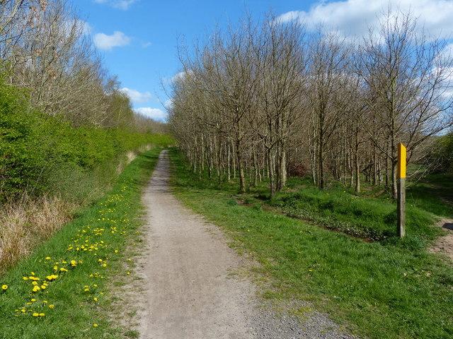 Ivanhoe Trail passing through Pear Tree Wood