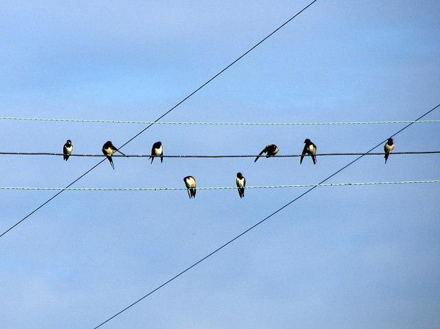 Swallows on wire near Bellsburnfoot