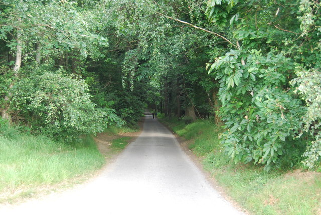 A wooded lane