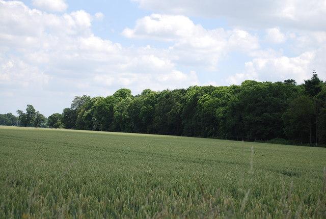 Woodley Wood