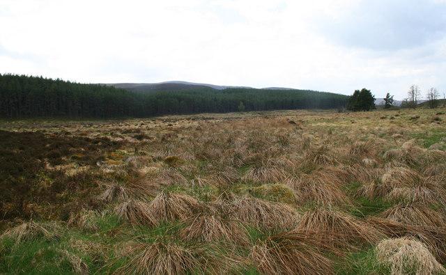 Clearfell and forest edge near Luibean Ruadh