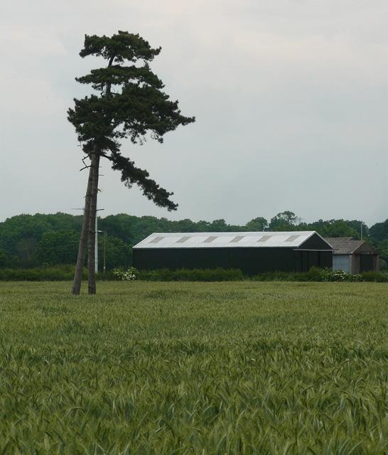 Farmland near Averham