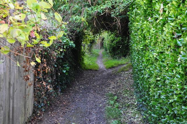Chambercombe : Path