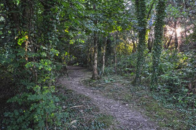 Chambercombe : Chambercombe Woods