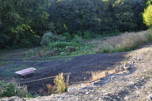 Ilfracombe : Allotment Gardens