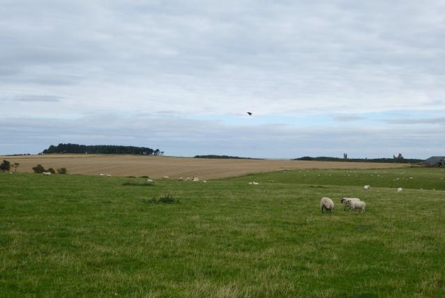 Farmland near Dunstan Square
