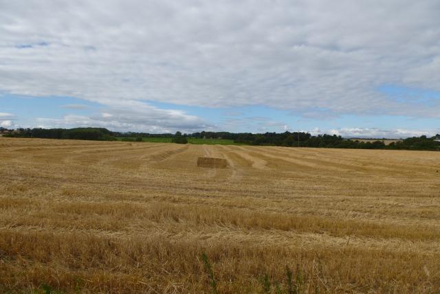 Stubble field near Dunstan Steads