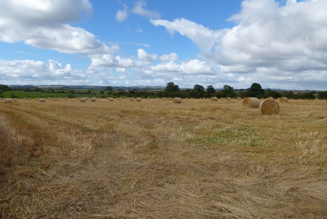 Bales near the dismantled railway