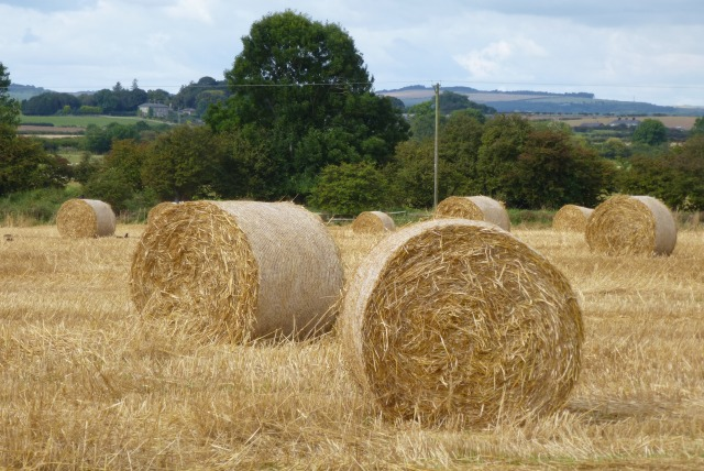 Bales near Chathill