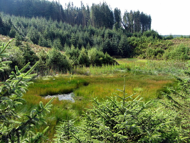 Pond in old quarry, Shielsike Crags
