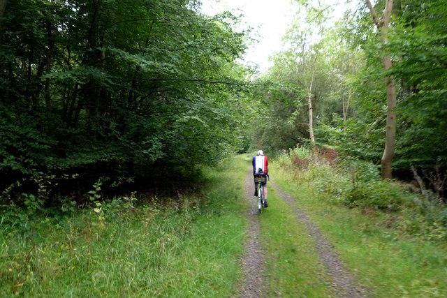 Savernake forest track