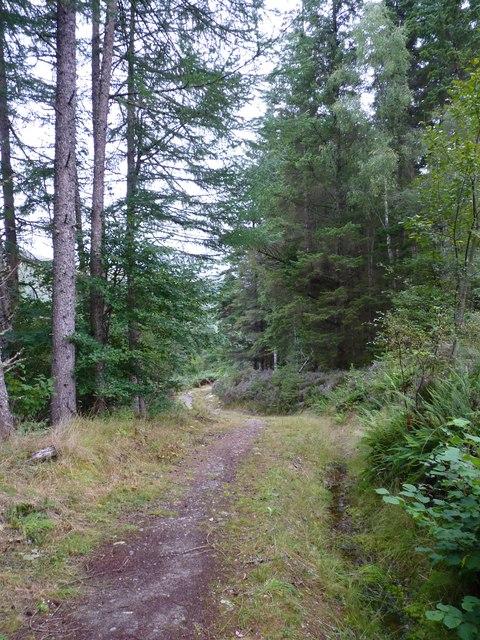 Track through Drynachan Wood