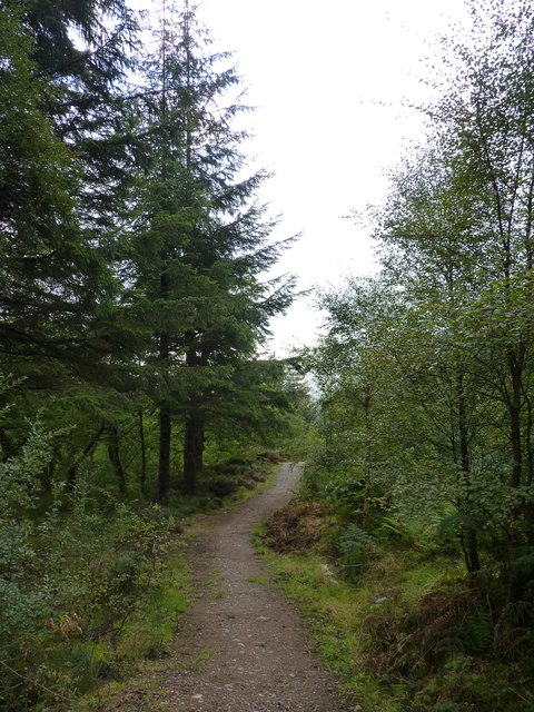 Track through Drynachan Wood