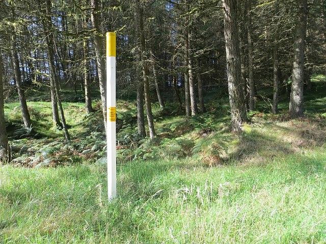 Forest, Earshaig