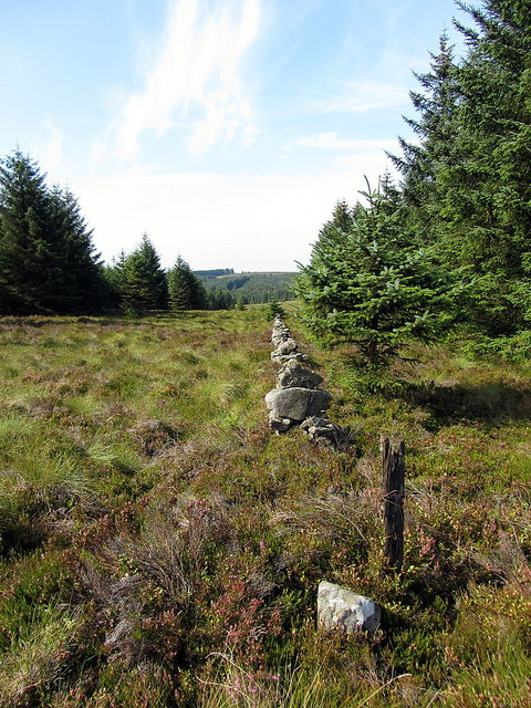 Border Line towards Buckside Knowe