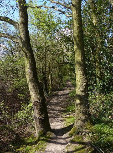 Path through Pear Tree Wood